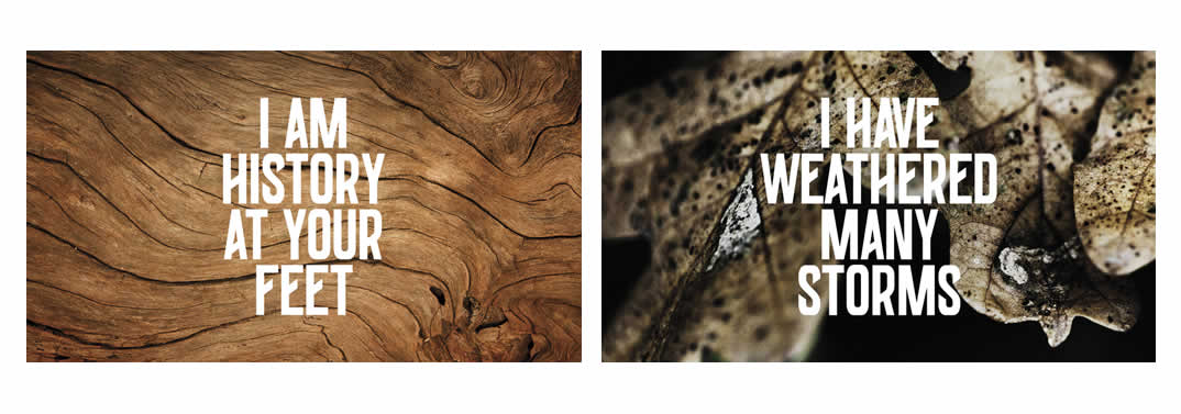 Growth Rings Brand Identity Spotlight