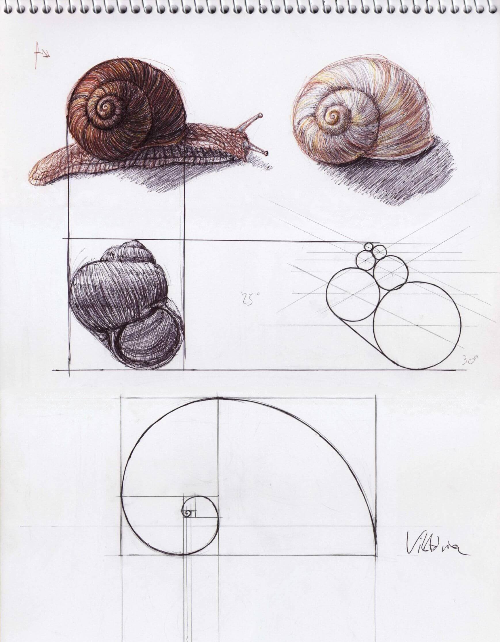 Golden Rectangles will create a pattern reminiscent of a snail's shell